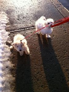 Puppies walking
