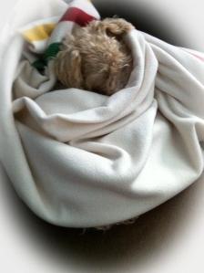 Puppie taking a nap